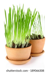 Green grass in flowerpots, isolated on white