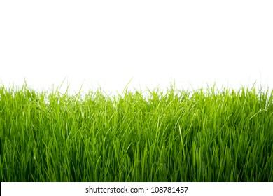 Green grass frame over white background