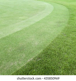 Green grass in golf Fairway ,Grass field background