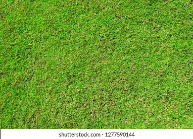 green grass ground texture background in fresh spring.