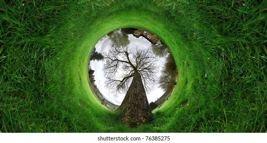 Green grass growing around a tunnel with a massive old tree in the middle of it.