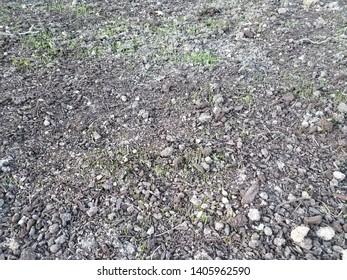 green grass growing in brown dirt or soil