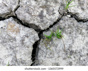 Green grass grows on the ground, which is covered with cracks