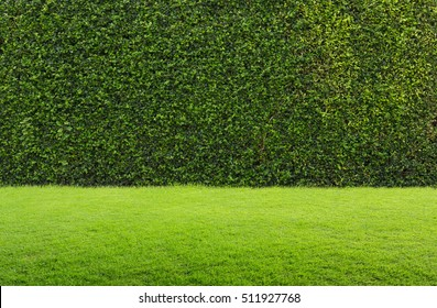 green grass and hedge