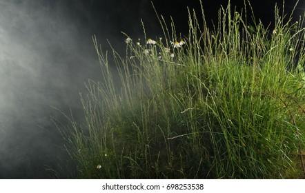 green grass hill in fog