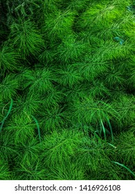 green grass horsetails on forest meadow natural background