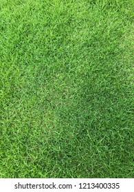 Green grass in house garden.