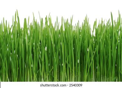 green grass isolaten on white background