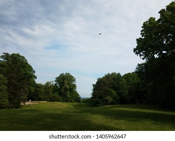 green grass or lawn with bird in sky and trees
