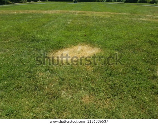 green grass lawn with dead brown patches