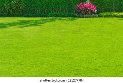 Green grass, lawn with the front lawn for background.