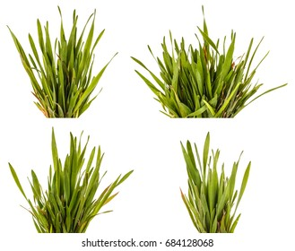 Green grass lawn isolated on white background. Set