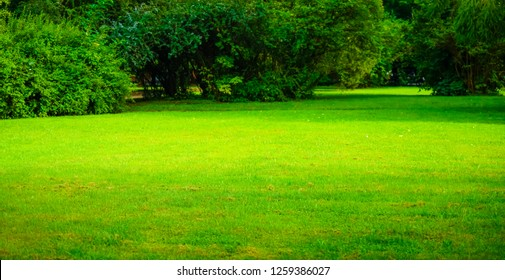 green grass lawn, meadow in city park. outdoor background. no people. empty space.