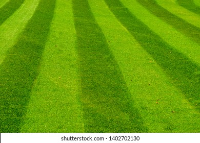 green grass lawn mowed in a striped pattern, decorative grass pattern, gardening and garden maintenance
