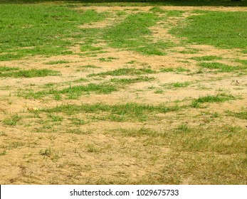 green grass lawn on the ground with sand