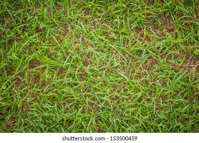 green grass lawn on soil background image