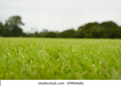 Green grass lawn with shallow DOF on cloudy day in a public park, soft focus