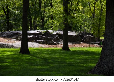 Green grass lawn under the shade of trees and stone in park