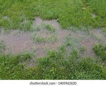 green grass or lawn or yard and water puddle
