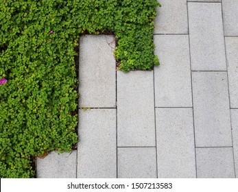 green grass lawning with concrete block pavement pattern detail in landscape (softscape and hardscape) design