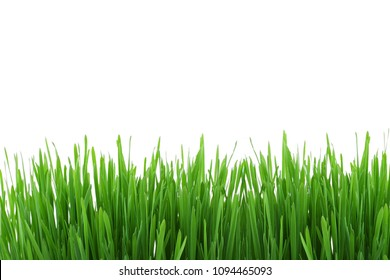 Green grass meadow border pattern. Spring or summer nature plant field lawn. Grass isolated on white background.Design for web,montage,banner decor.Copy space empty blank for text.