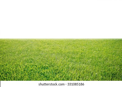 green grass meadow field from outdoor park isolated in white background