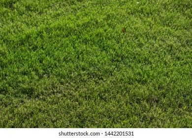 green grass meadow natural simple background textured surface