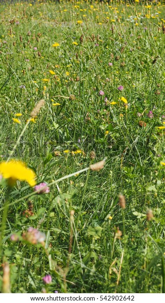 Green grass meadow texture useful as a background