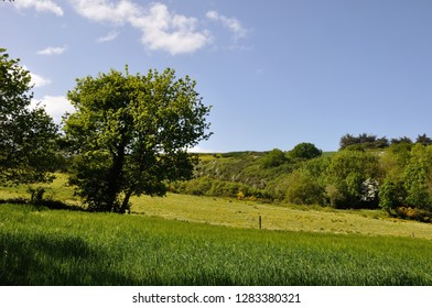 Green grass meadow woody hedgerow