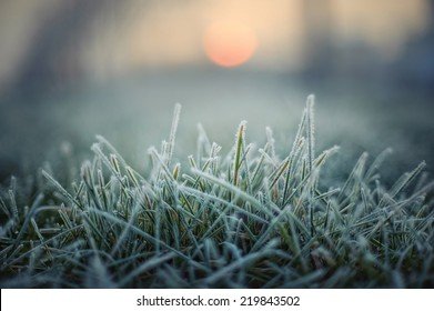 green grass with morning frost and red sun