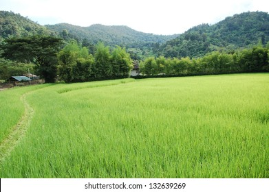 green grass and mountains Thailand Chang Mai