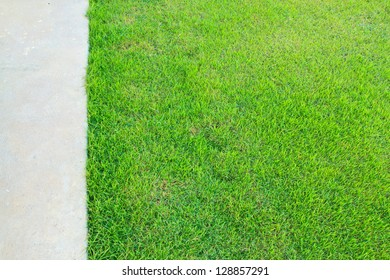 Green grass natural background and concrete floor. Top view.