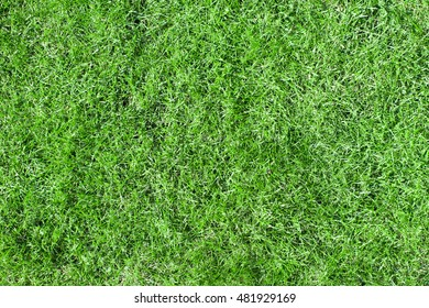 Green grass natural background texture. Hi res photo.