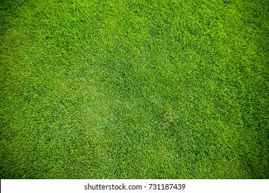 Green grass. natural background texture. fresh spring green grass