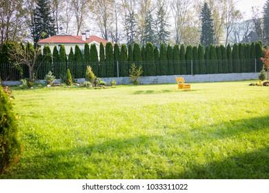 Green grass nature