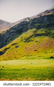 green grass and nature against the backdrop of the mountains of Iceland - the landscape of a popular tourist landscape
