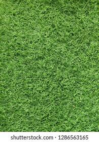 Green grass nuture