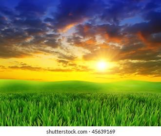 green grass on a background beautiful sunset