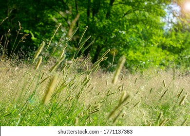 Green grass on the background of setting sun, soft focus