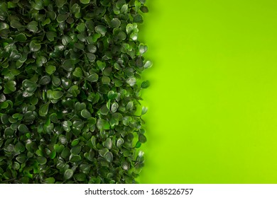 Green grass on green background. Starweed -winterweed, chickweed, satinflower, Stellaria media- plants. Good green leaves. Green background. Texture