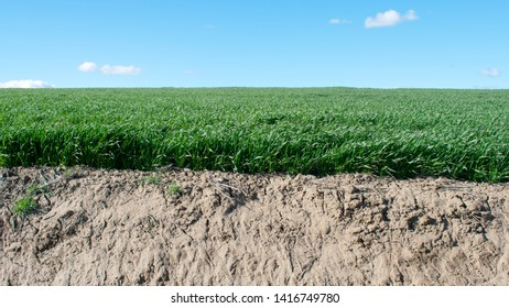 green grass on farm land with blue sky