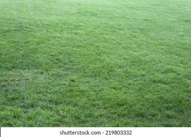 Green grass on the field.
