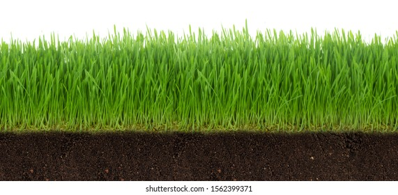 green grass on ground isolated on white background