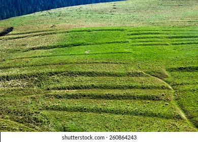 Green grass on hill