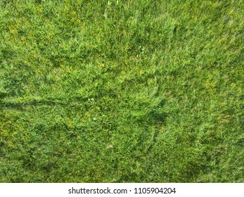 Green grass on a meadow top view. Natural texture.