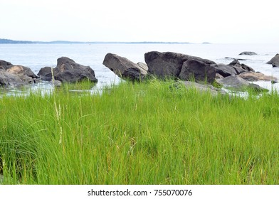 Green grass on rocky ocean sea shore