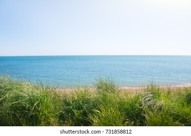 green grass on the summer sea beach