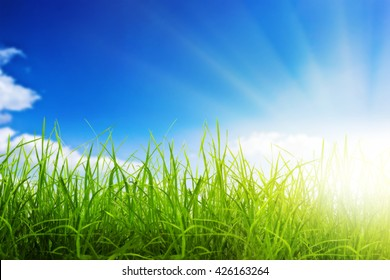 Green grass over a blue sky and sunset background