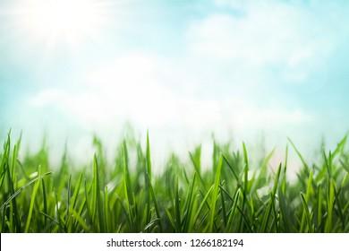 Green grass over sunny blue sky, spring background