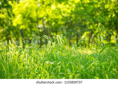 green grass in the park
